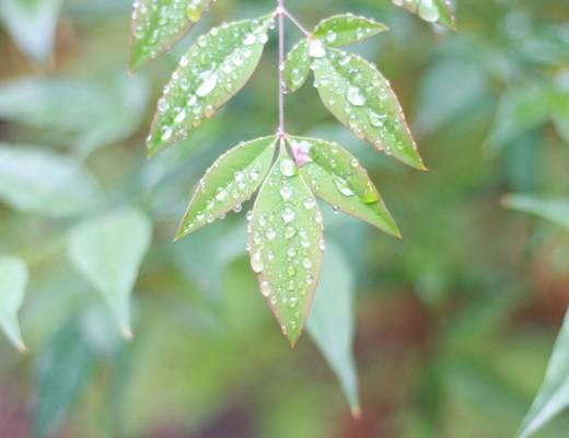 greenwashing_grand_groupe_ethique