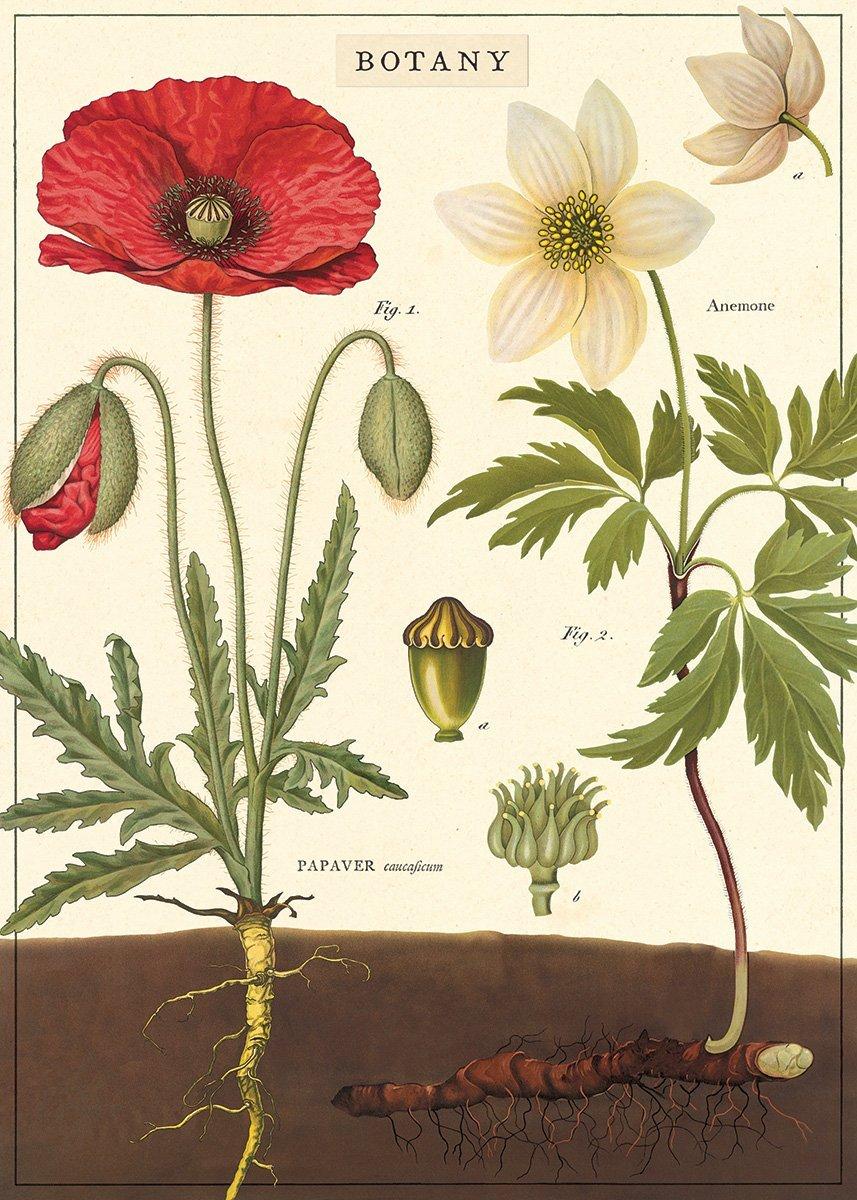 Poster Botany