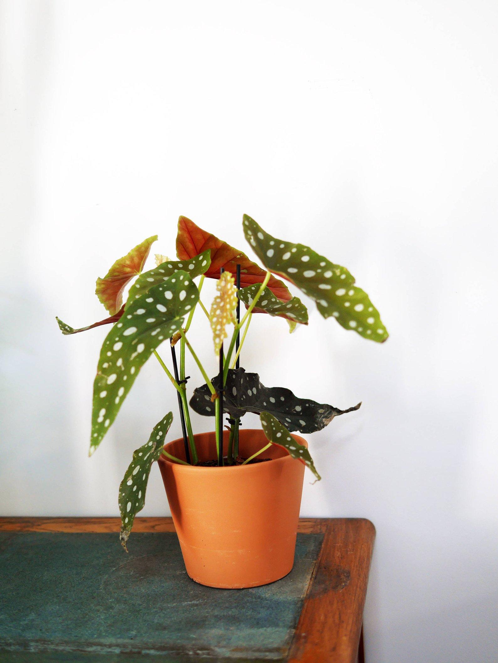 plante etsy